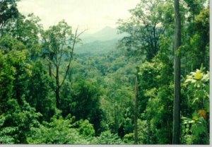 hutan merupakan penghasil oksigen